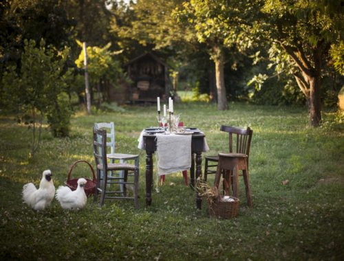 "Venetian Melanzane in Saor and a talk in the garden about ""chiaroscuro"" photography 